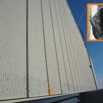 asbest robinson beplating